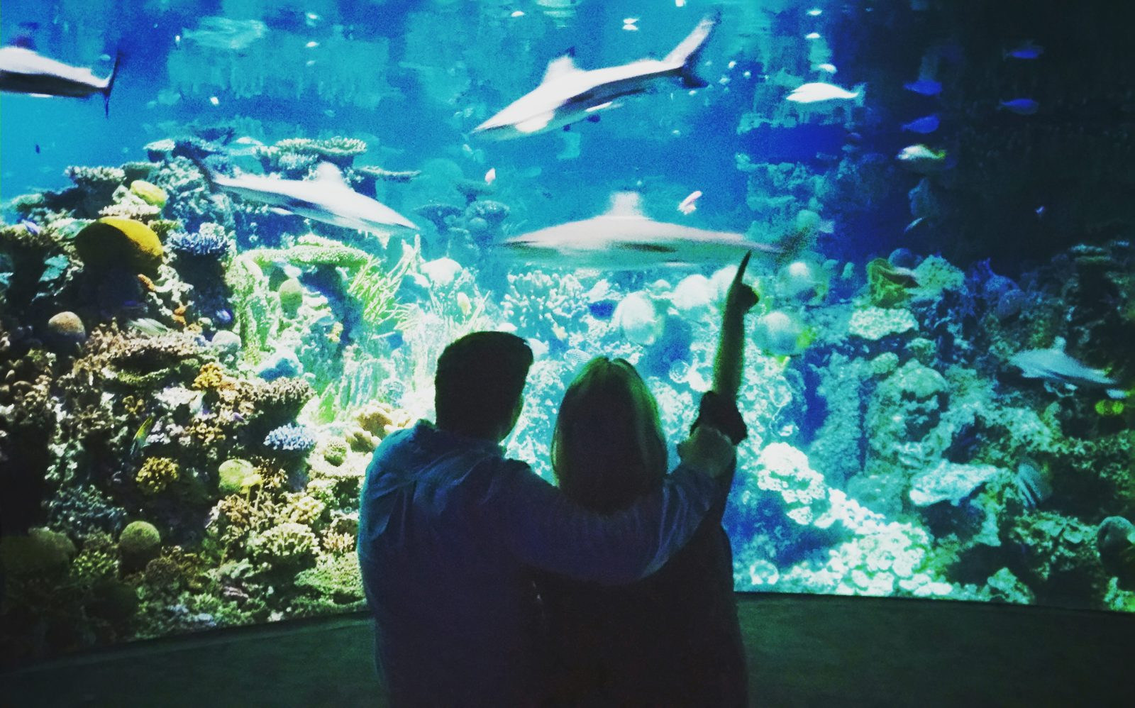 aquarium dating Sexual astrology - dating an aquarius, dating advice and tips - read how the stars influence your sex life sexual compatibility between astrological signs, dating tips and dating advice, 2008 yearly, monthly, and weekly horoscopes, and forecasts.